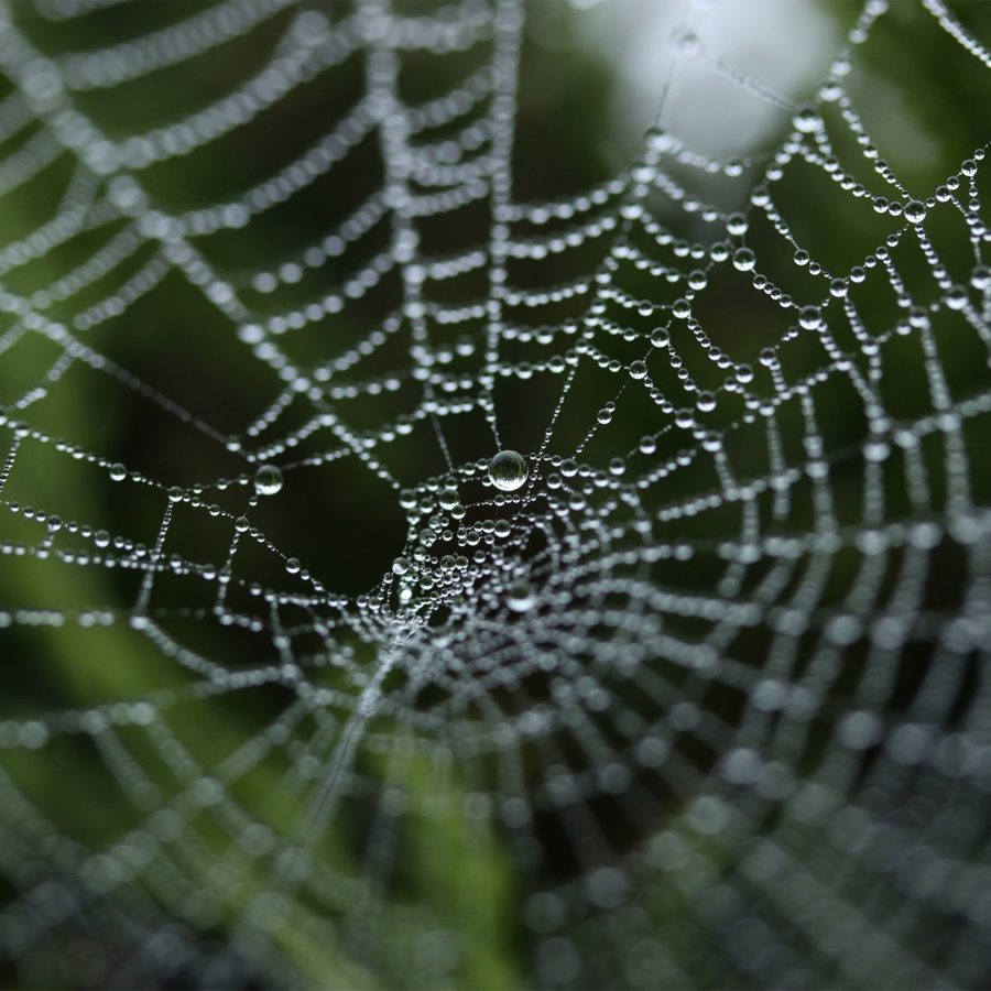Web Design & Development Misconceptions