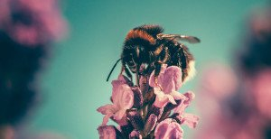 Bee on flower - Design Thinking at one2love.agency