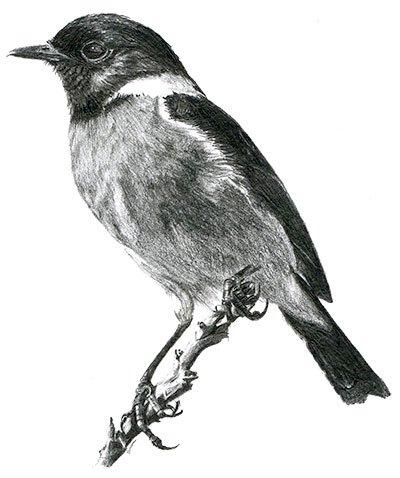 Lodestone Illustrations - Bird
