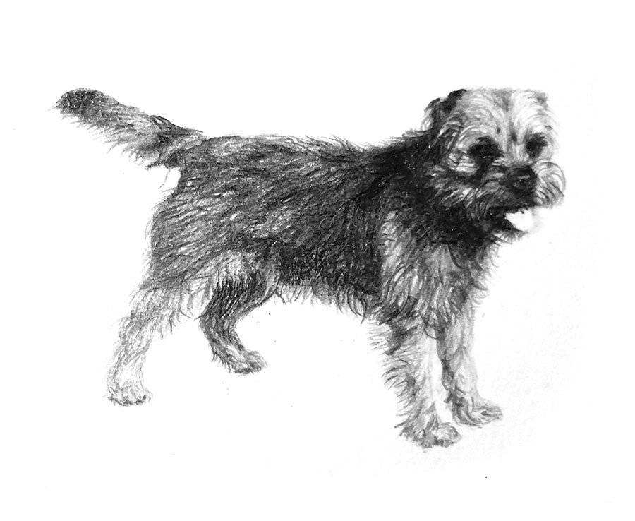 Lodestone Illustrations - Dog